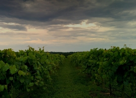 winery-pic-3